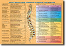 spine organ connections poster